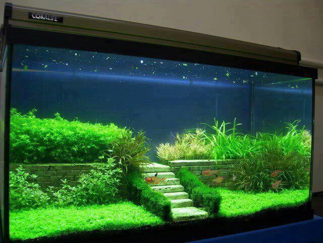 Aquarium Planted