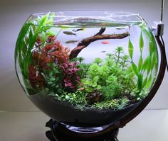 77e5ca76c63ea00c00c157710917cbca--bonsai