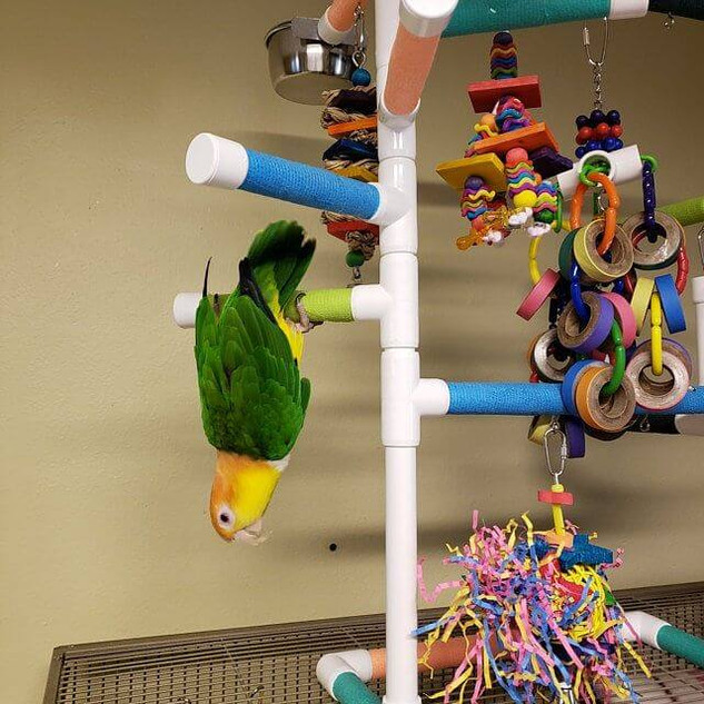 PVC BIRD PERCH MOD29