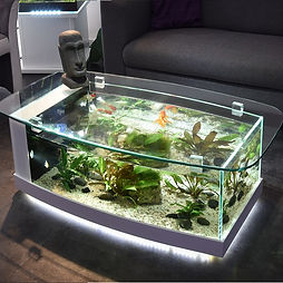 table-aquarium-cintree.jpg