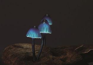 PURPLE 3 LED