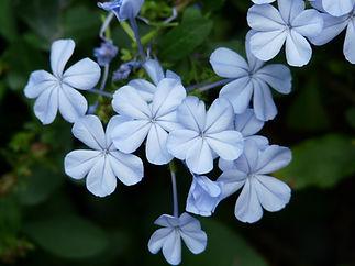 flowers-73945_1920.jpg