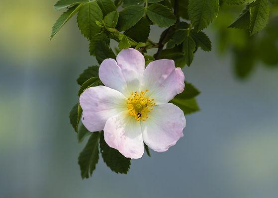 wildflower-4175698_1920.jpg