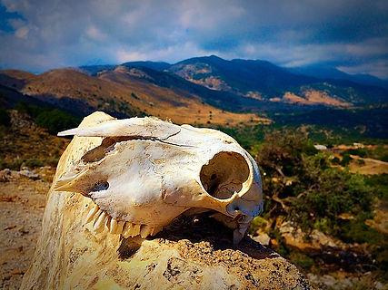 skull-553198_640.jpg