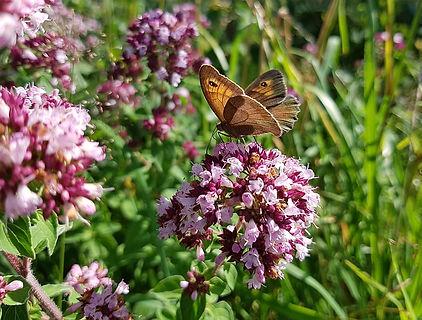 butterfly-2473738_640.jpg
