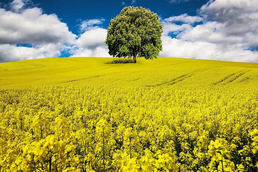 spring-1376388_1280.jpg