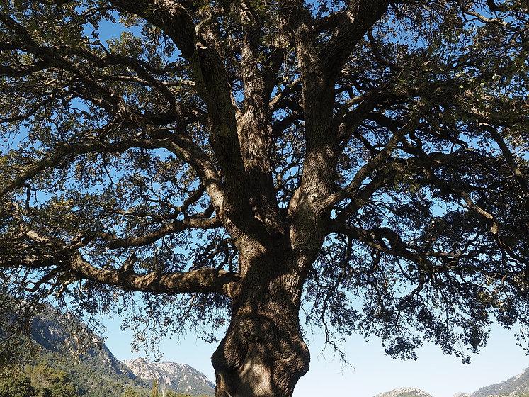 tree-1117746_1280.jpg