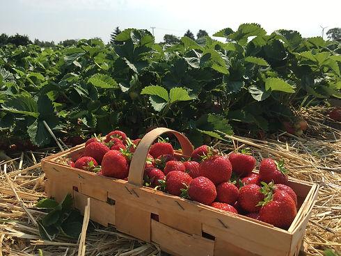 strawberries-1482237_1280.jpg