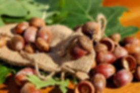 acorns-1710577_640.jpg