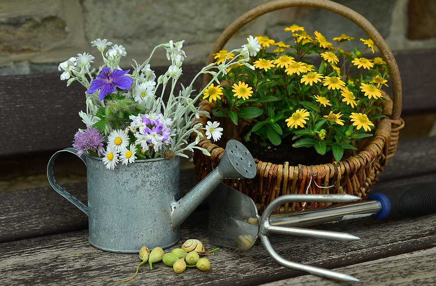 flowers-779317_1280.jpg