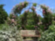roses-2794889.jpg