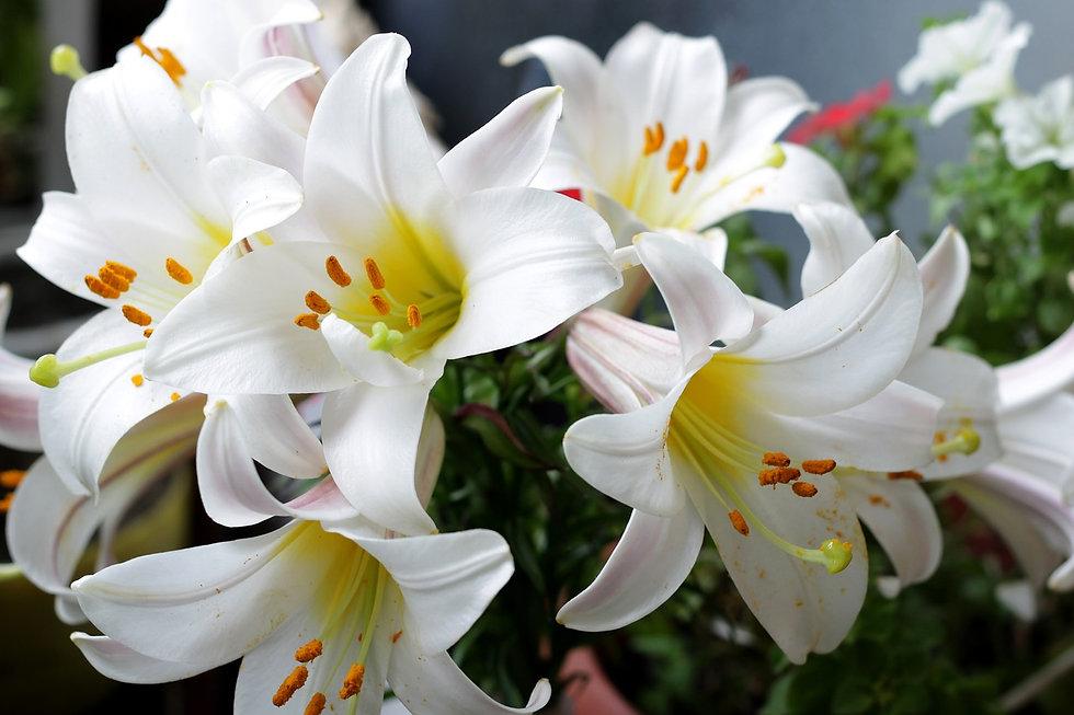 flowers-3390630_1280.jpg