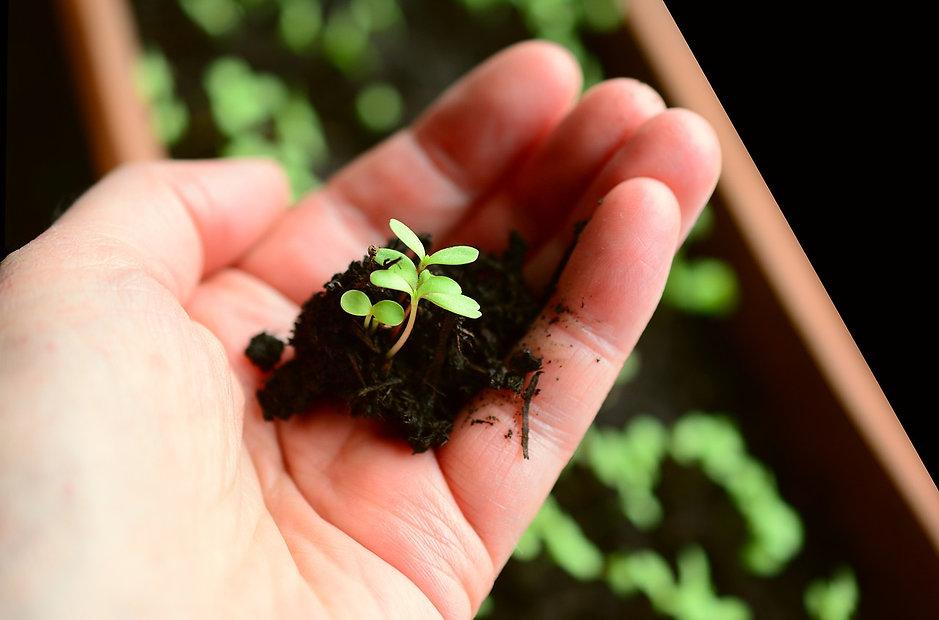 plant-4036159_1280.jpg