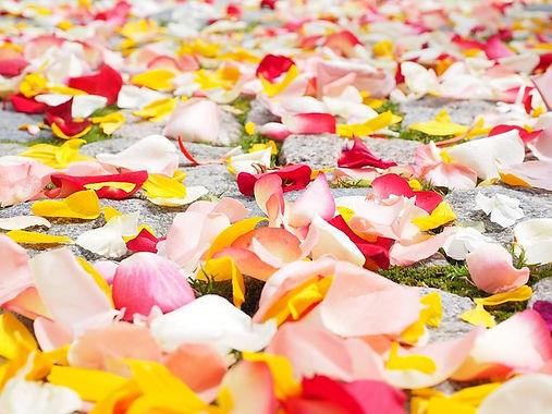 rose-petals-693570_640.jpg