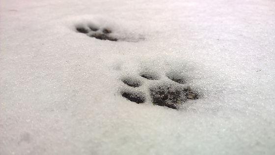 snow-861557_640.jpg