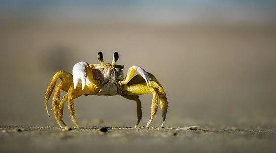 crab-1990198_640.jpg