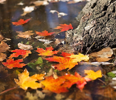 autumn-2900166_1280.jpg