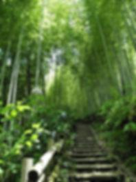 bamboo-214225_640.jpg