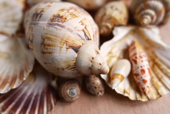 seashells-3478015_640.jpg