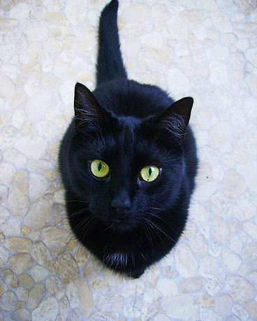 cat-2390438_640.jpg