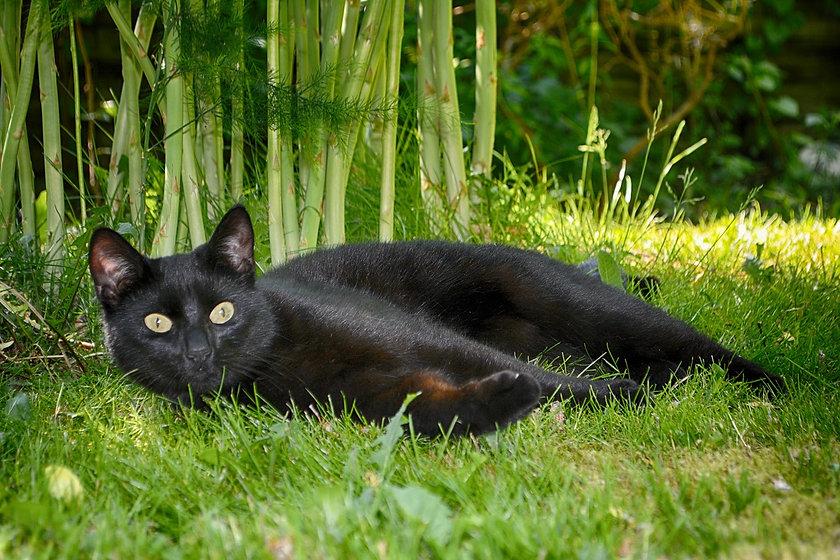 cat-3620854_1280.jpg