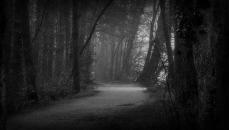 forest-1206932_640.jpg