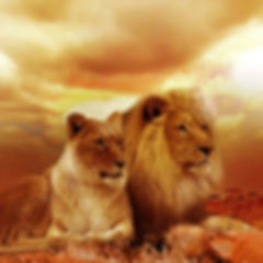 lion-577104_640.jpg