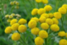 yellow-flowers-1186677_640.jpg