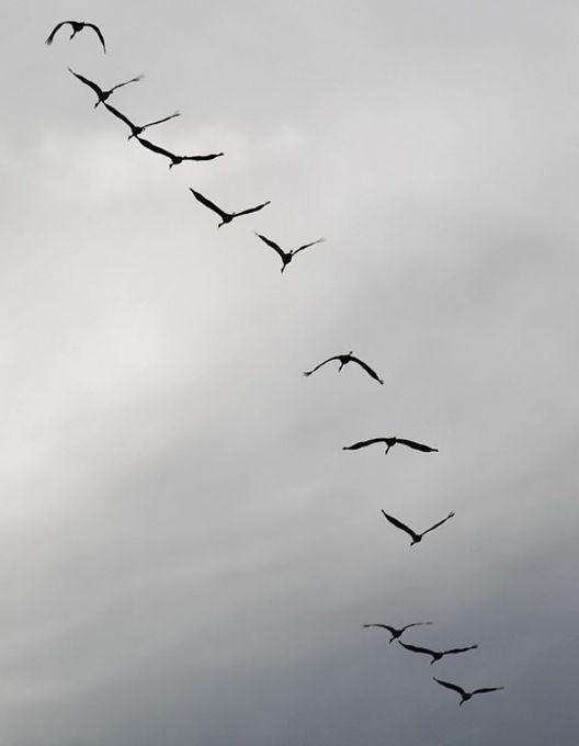cranes-534917_640.jpg