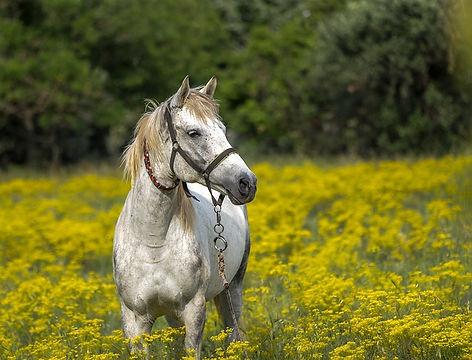 horse-3419146_640.jpg