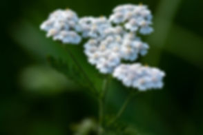 plant-3471081_640.jpg