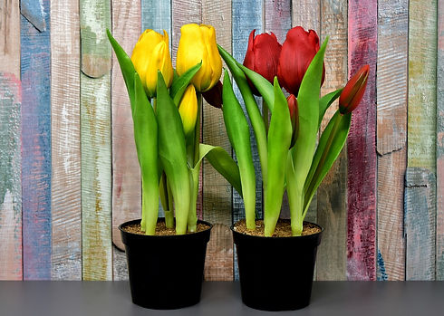 tulips-3167467_1280.jpg