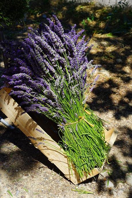 lavender-1595603_640.jpg
