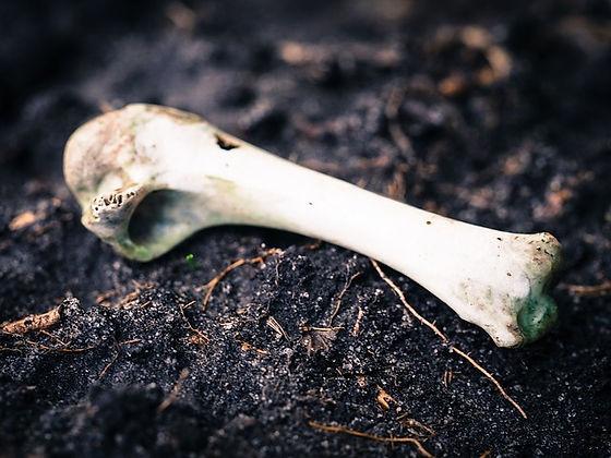 bone-949077_640.jpg