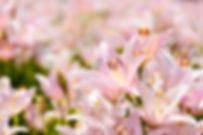 natural-3490603_1280.jpg