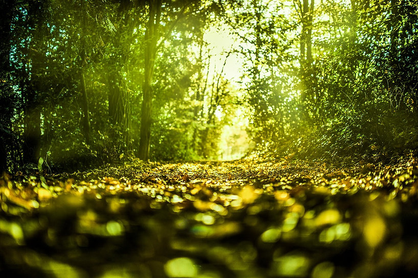 nature-2269468_1280.jpg