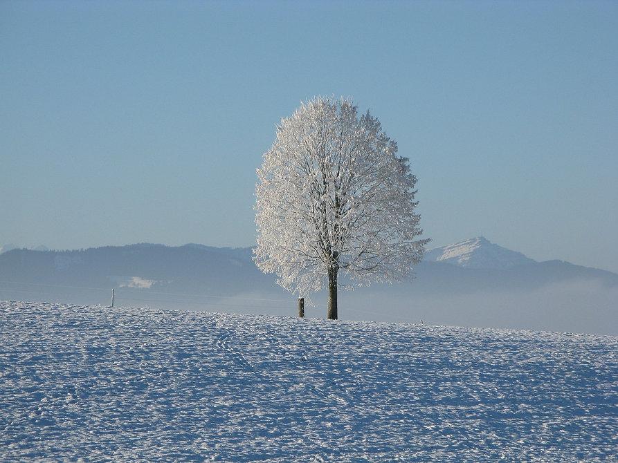 winter-198447_1280.jpg