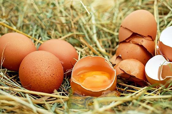 egg-1510449_640.jpg