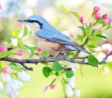 spring-bird-2295431_640.jpg