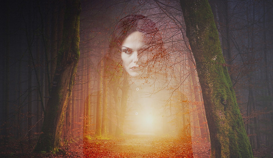 forest-3349575_1280.jpg