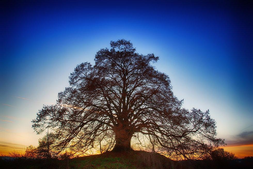 tree-3124103_1920.jpg