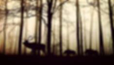 forest-1818690_640.jpg