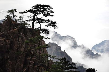 nature-3329358_640.jpg