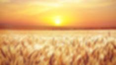 field-4034274_640.jpg