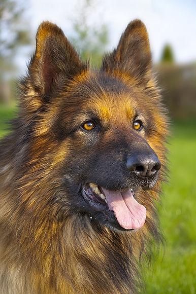 dog-1027235_640.jpg