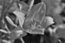 black-and-white-2499710_640.jpg