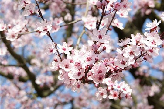 printemps-269974.jpg