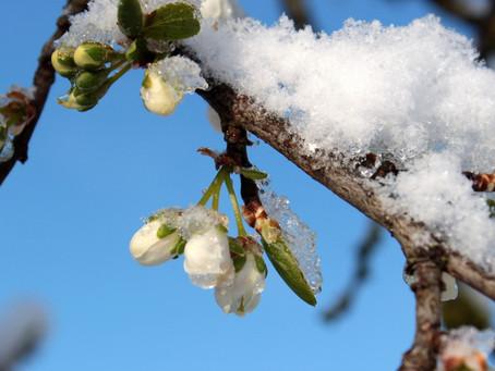 Retour de l'hiver la semaine prochaine, attention aux fortes gelées entre mardi et jeudi !