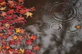 TENDANCES SAISONNIÈRES : Un début d'automne sec et souvent doux, une deuxième partie plus fraîch
