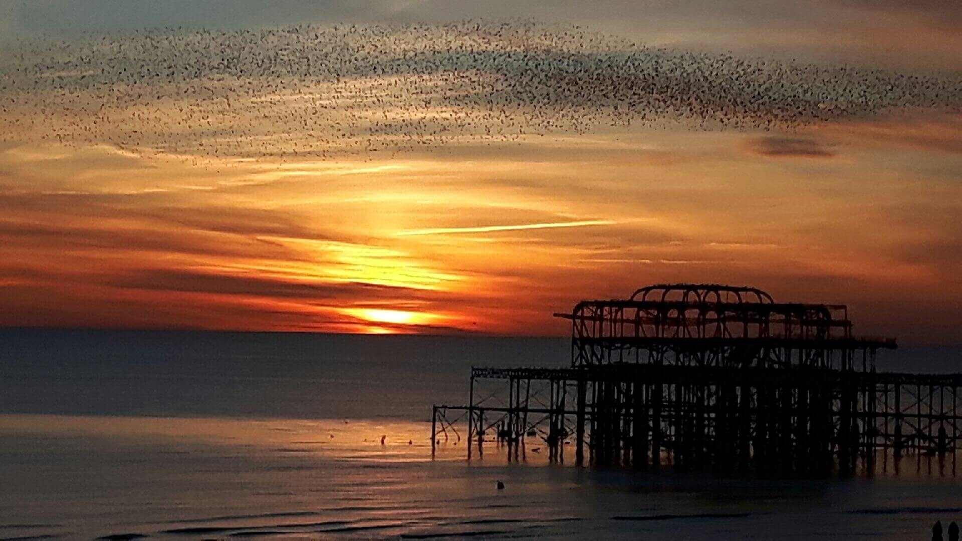 Beautiful sight of the starlings flying